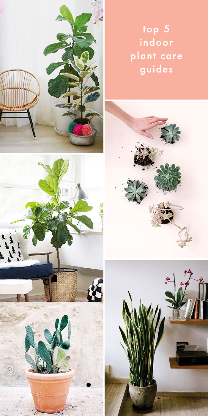 Top 5 Indoor Plant Care Guides | Earl Grey Creative